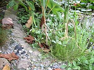 Teichfolie alles zum thema und die wichtigste frage vorab for Gartenteich anlegen fertigteich